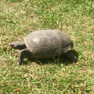 Glider Aerobic Ride Orlando turtle